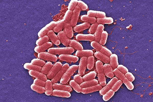 <i>E. coli</i> Survival, Growth in IBD Flares Explained