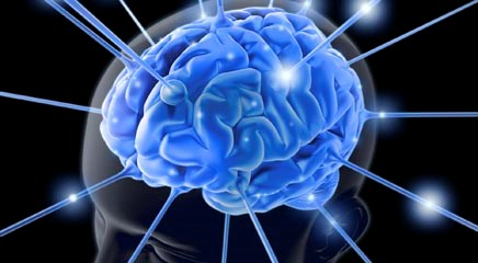 2-methoxyestradiol inhibits proliferation, pro-inflammatory responses, phagocytosis in microglia