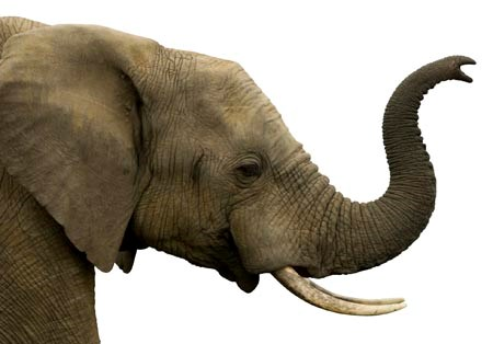 Memory Toolbox: 75 Tips to Transform from Amnesic to Elephantic