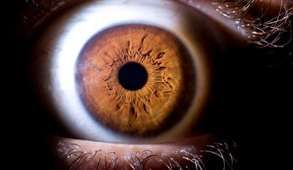 Amphotericin B may Eliminate Cornea Fungal Contaminants