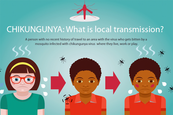 Chikungunya: What is local transmission?