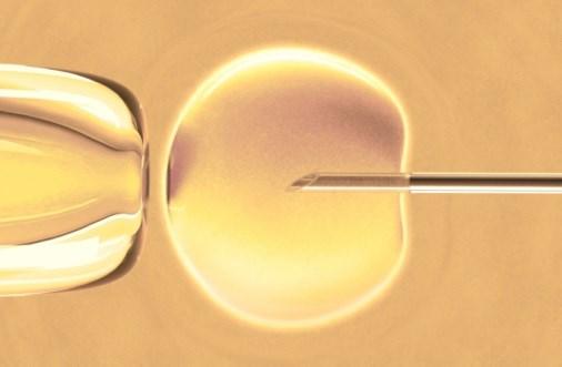 Women undergoing mini-IVF have no ovarian hyperstimulation