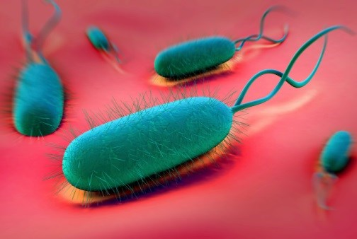 Can Eliminating H. pylori Prevent Gastric Cancer?