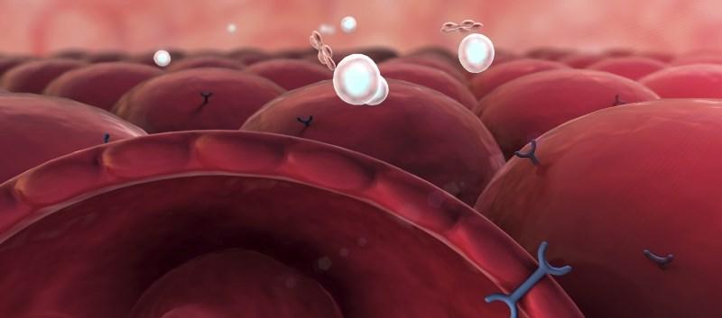 Novel Glucokinase Activator Shown Effective, Safe for Type 2 Diabetes