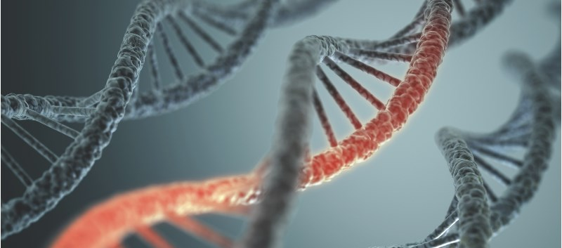 Study IDs Genes That Can Help Predict Breast Cancer Survival