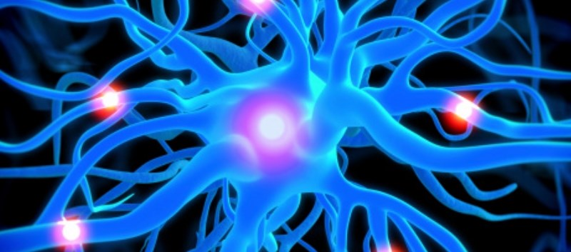 Researchers ID'd Neuronal Receptor That May Regulate Energy Metabolism
