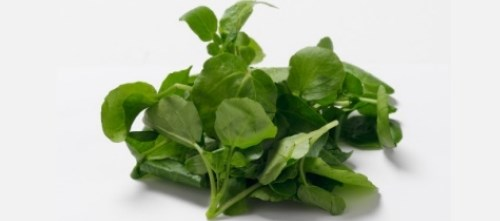Participants took 10mg of watercress extract and 1mL of olive oil mix for 1 week
