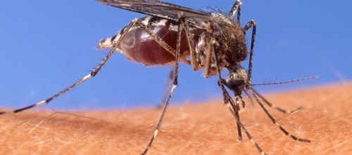 But aerial spraying has made a big dent in mosquito control, health officials say