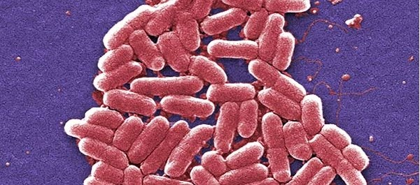 Deadly E. coli Outbreak Has Officials in U.S. Searching for Source