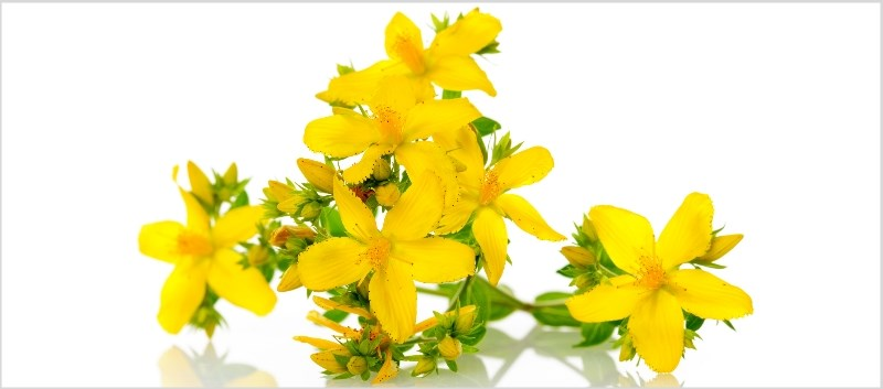 St. John's wort has been used as an herbal remedy for over 100 years