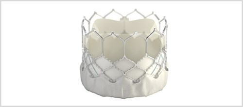 The valve is made of cow tissue attached to a balloon-expandable, cobalt-chromium frame for support.