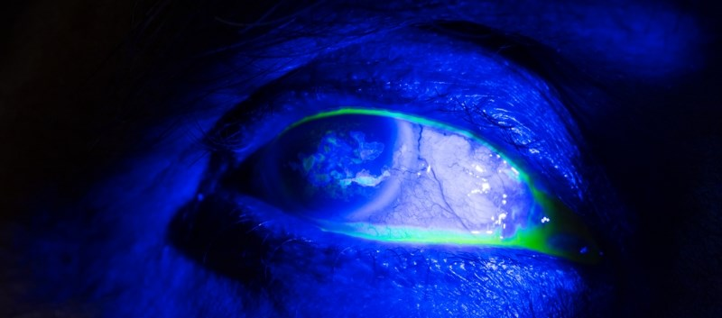 Review: Drugs that Induce Corneal Epithelial Changes