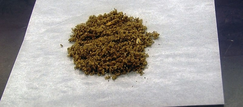Synthetic Cannabis Responsible for 'Zombie' Outbreak in NYC