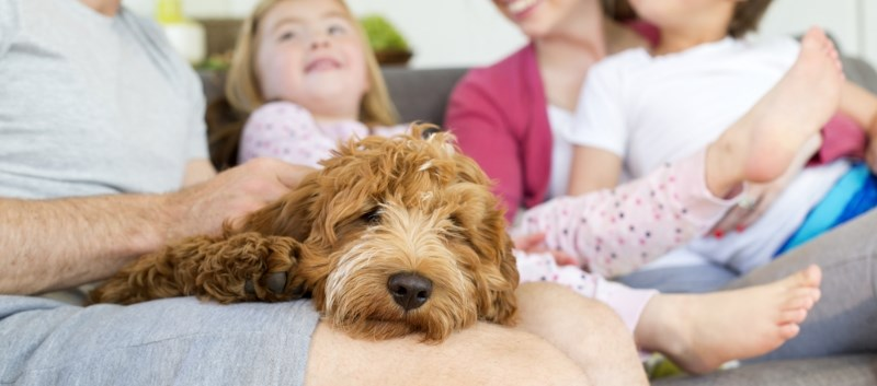 Study Calls Attention to Pediatric Posioning Risk from Pet Meds