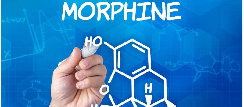 "The researchers found that physical manipulation ""does not defeat the ER mechanism of morphine MorphaBond ER."""