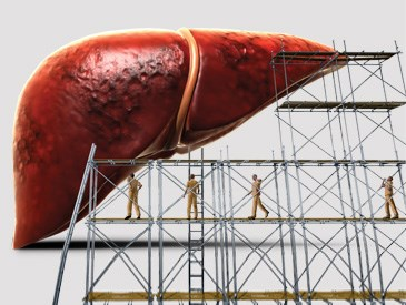 Liver Injury Linked to Muscle Growth Supplement