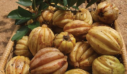 Fighting Obesity with Garcinia Cambogia: Is It Worth the Risks?