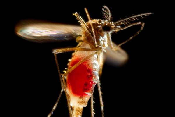 Over 30 cases of Zika virus have now been recorded in the U.S.