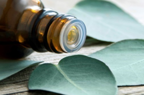 The Utility of Eucalyptus