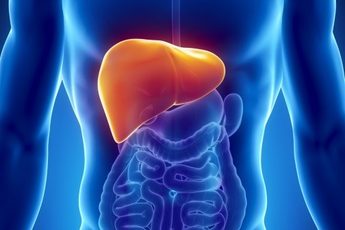Tempol, Antibiotics Promising as Nonalcoholic Fatty Liver Disease Tx