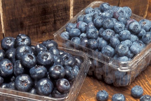 Blueberries Examined as Potential PTSD Treatment