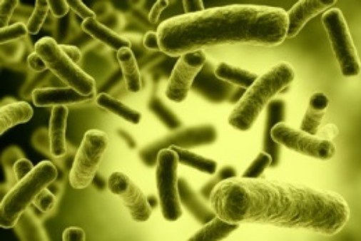 Study Links Acute Mania With Antibiotic Usage