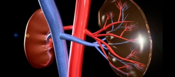 Does Sodium Bicarbonate Benefit Patients With Impaired Kidney Function Undergoing Angiography?