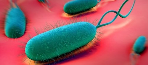 Novel H. pylori Eradication Therapy Effective in Phase 3 Trial