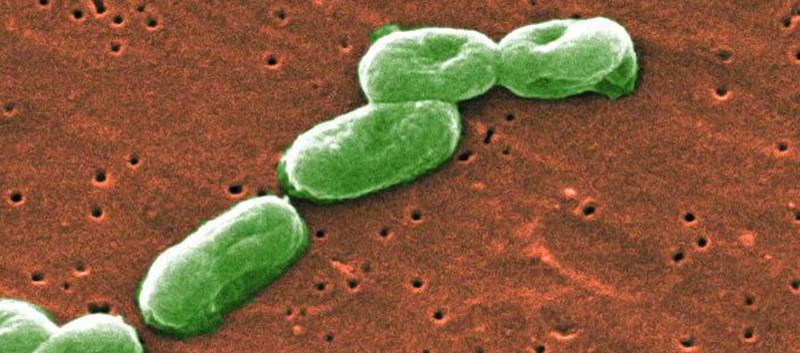 Burkholderia cepacia was also found in the water system used to manufacture the product by PharmaTech