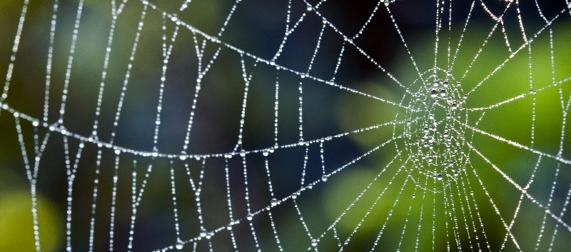 Spider silk has shown promise in treating nerve damage and aiding artificial skin growth