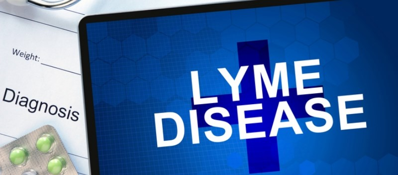 Currently there is no vaccine available to protect against Lyme disease