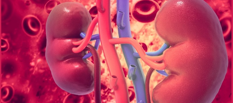 Residual Renal Function Not Linked to ESA Requirements