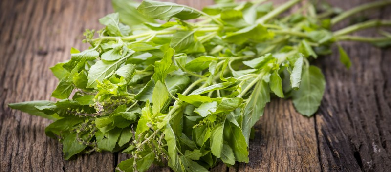 Holy basil is considered a sacred herb in many parts of the world