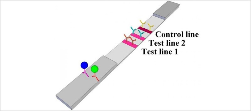 If the ST2 antigen is present, a blue dot appears on the strip; if the BNP antigen is present, then a green dot appears
