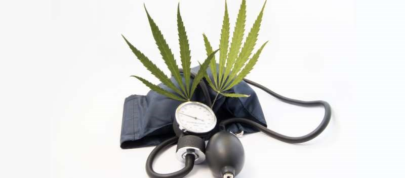 An increasing risk of death from hypertension was tied to increased duration of marijuana use
