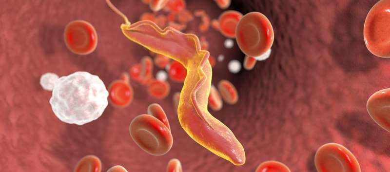 Chagas disease, also known as American trypanosomiasis, is caused by the Trypanosoma cruzi parasite