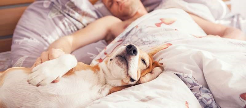 Do Pets in the Bedroom Impact Sleep Quality?