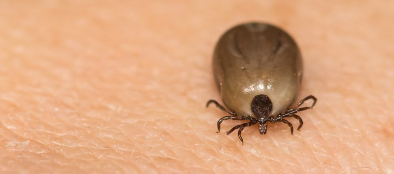 First Tests to Screen for Babesiosis in Whole Blood, Plasma Approved