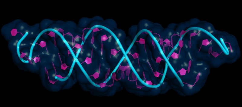 mRNA Assay Less Sensitive Than DNA Assay for Latent HPV