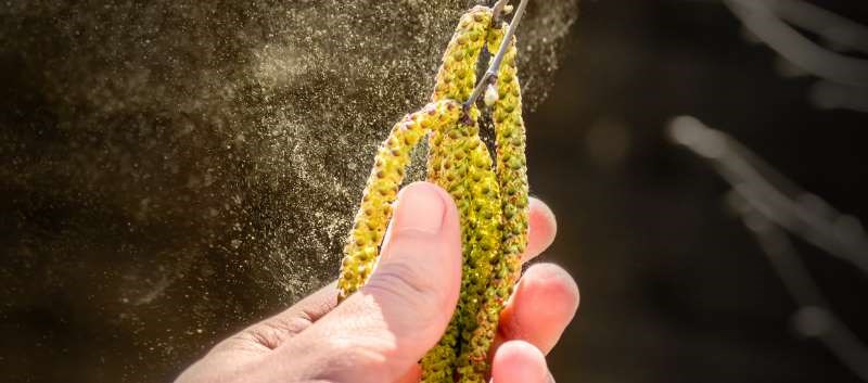 Birch Pollen-Related Foods Can Trigger Dermatitis Reactions