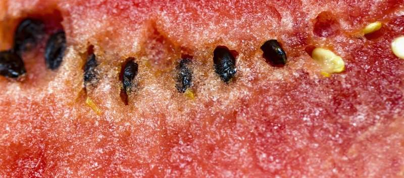 Sixty Sickened so Far in Salmonella-Tainted Melon Outbreak
