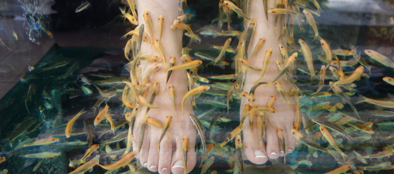 Dermatologists should be aware of potential skin, nail problems tied to fish pedicures