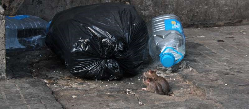 First Human Case of Rat Strain of Hepatitis E Seen in Hong Kong