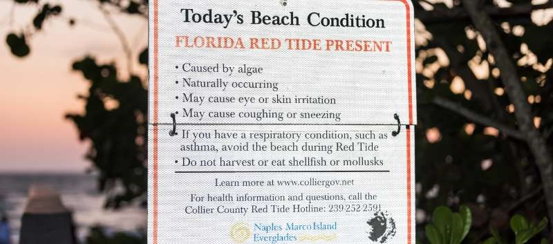 Red tide can cause symptoms such as breathing problems as well as skin and throat irritation.